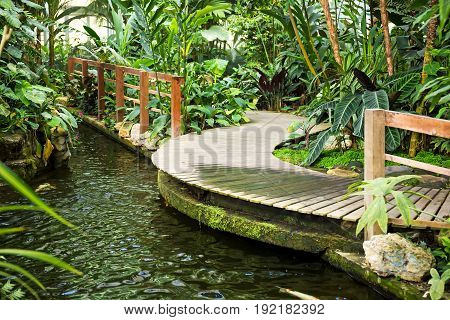 In the garden with a fish pond and a wooden walkway