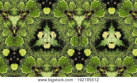 Green Abstract Macro Pattern