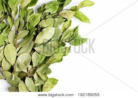 Branches Of Laurel Bay Leaves On White