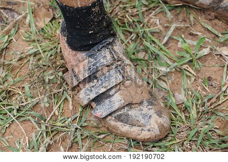 Dirty mountain bike shoes covered with mud and dirt / Cycling in muddy and wet condition concept