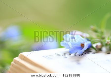 Bluebells displayed on a page of music notes