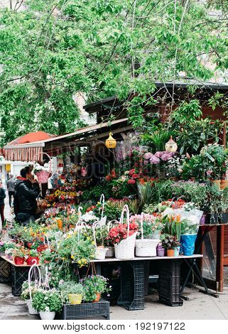 Fresh flowers for sale at flower market in Budapest, Hungary
