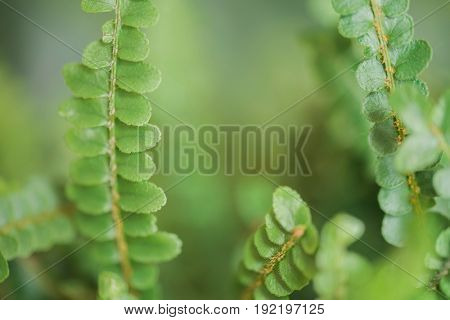 Fern fronds up close