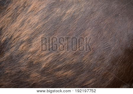 horse body as background and texture horizontal
