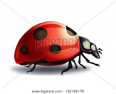 realistic ladybug isolated on white. vector illustration