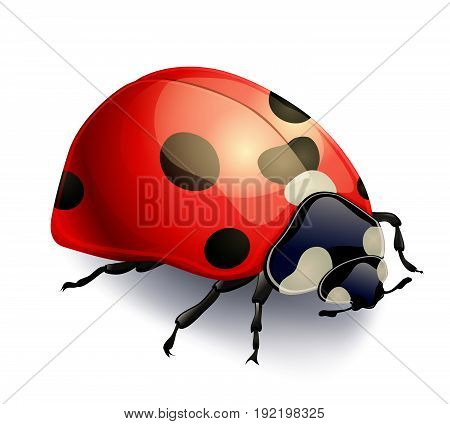 red ladybug isolated on white. realistic vector illustration