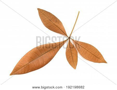 A faded leaves on a white background