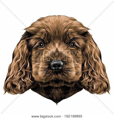 dog breed Cocker Spaniel puppy sketch vector graphics color picture