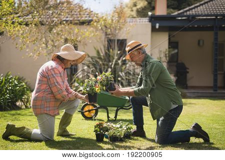 Side view of senior couple holding plants while kneeling on field in yard