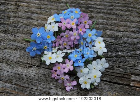 forget-me-not flowers, three colors: white, blue and pink on a wooden table