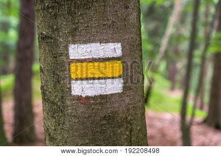 Colorful Tourist Sign Or Mark On Tree