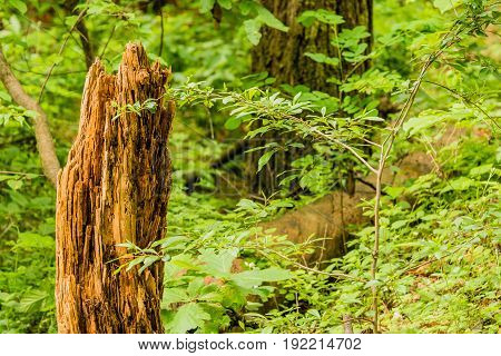 Closeup of a tree stump next to a young sapling in a woodland area with a soft blur of green foliage in the background.