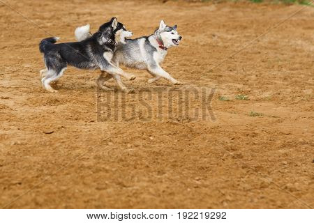 Two dogs in collars playing on street at ground