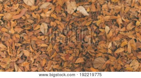Dried leaf in the nature texture background blurred