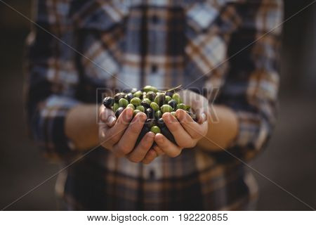 Mid section of female holding olives at farm