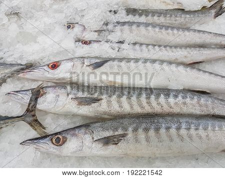 Obtuse barracuda fish fresh in ice sell on supermarket in Thailand