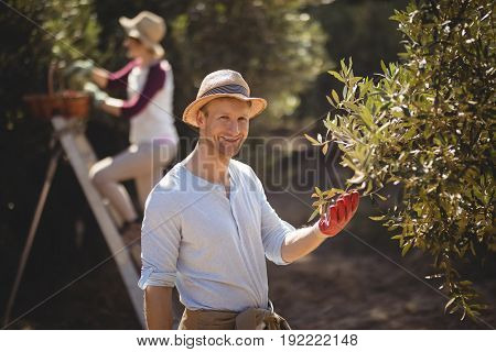 Portrait of smiling young man plucking olives with woman in background at farm