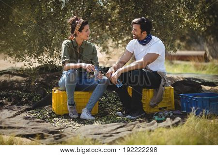 Smiling young couple talking while sitting on crates at olive farm