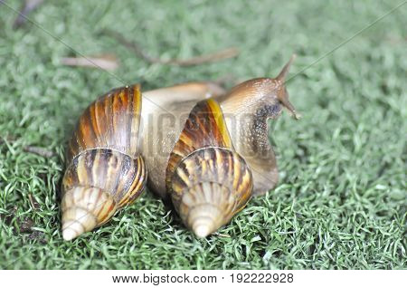 making love snail having sex snail or two snails