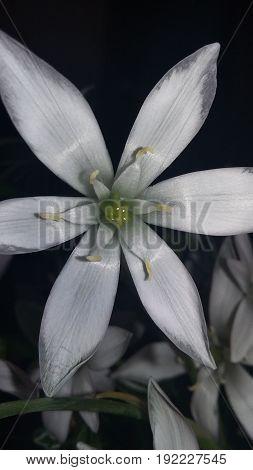 Fiore , flower, spring , primavera , Italia