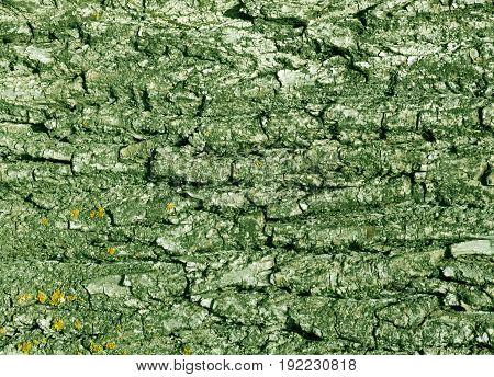 Tree Bark Texture In Green Tone.