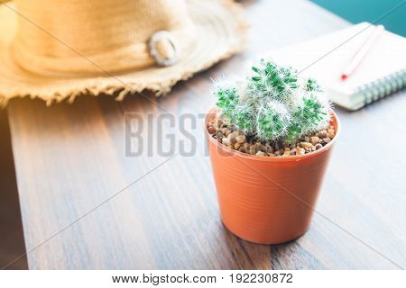 Closeup of pot of cactus notebook and pen on table Startup concept