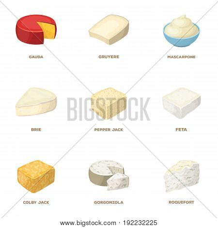 Parmesan, roquefort, maasdam, gauda.Different types of cheese set collection icons in cartoon style vector symbol stock illustration .