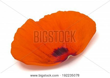 Petals Of Poppy Flower, Isolated On White Background
