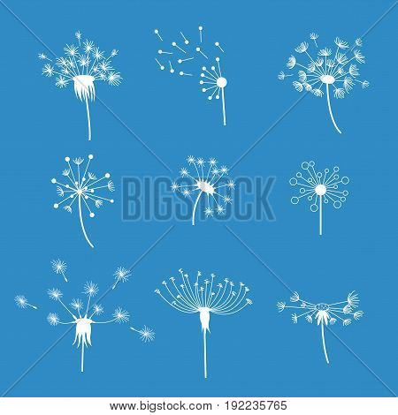 Dandelion Fluffy Flower and Seeds White Silhouette on a Blue Background Set Decoration Summer Plant. Vector illustration