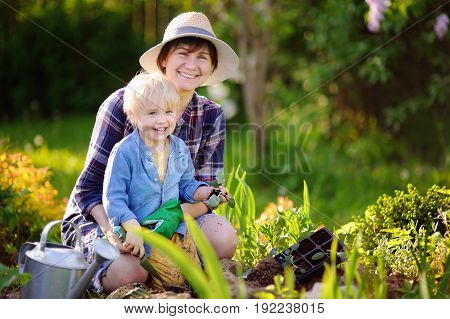Beautiful woman and her cute grandson planting seedlings in bed in the domestic garden at summer day. Garden tools gloves and watering can outdoors. Gardening activity with little kid and family