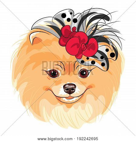Vector fashion cute dog Pomeranian in the red and black hat