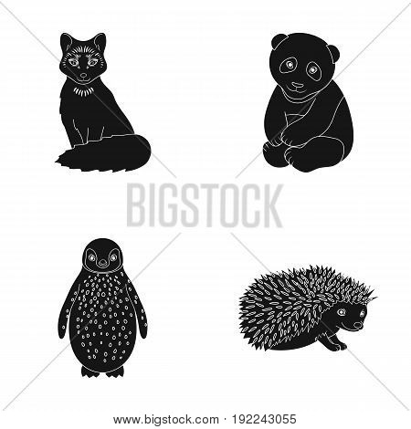 Fox, panda, hedgehog, penguin and other animals.Animals set collection icons in black style vector symbol stock illustration .