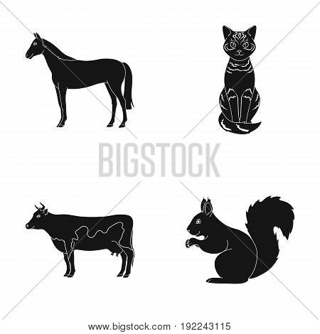 Horse, cow, cat, squirrel and other kinds of animals.Animals set collection icons in black style vector symbol stock illustration .