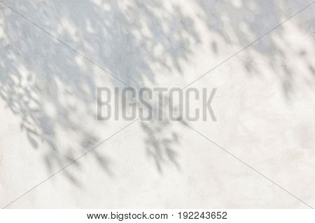 The shadow of the thick foliage and branches on the wallthe dark shadow of the thick foliage and branches on the wall