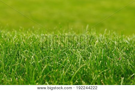 Green grass background , focus on foreground