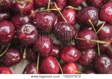 Bright juicy ripe cherry covered with water droplets close-up