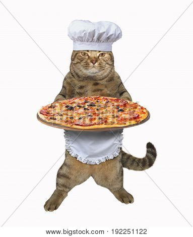 The cat chef cooked a big pizza. White background.