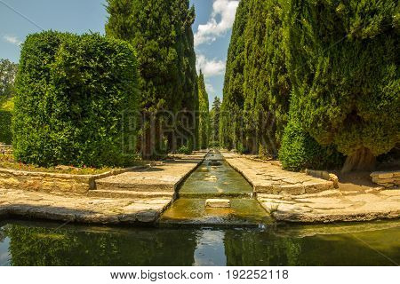 Cypress alley with a beautiful water cascade and blue sky