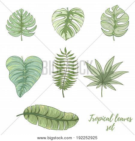 Hand drawn tropical palm leaves set. Summer vector illustration of areca palm, banana leaves, monstera, fan palm can be used as invitation, postcard, menu, flyer banner or website decoration.