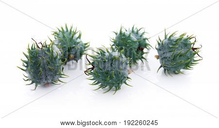 Closeup Castor oil plant on white background