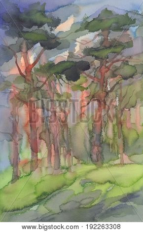 pine forest in the sun with shadows watercolor background