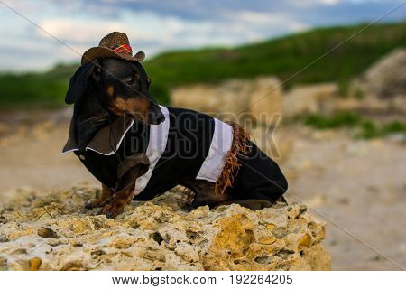 Horizontal portrait of a dog (puppy), breed dachshund black and tan, in a cowboy costume sits on a stone against a background of green hills and sky.