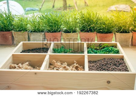 Selective focus : Row of small green tree in clay pot on wooden table beside window with sunlight background and raw material in small wooden container for garden decoration. (Autumn filter effect)