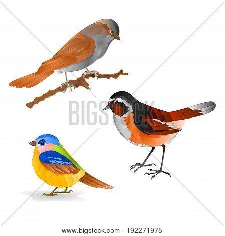 Singing smalls birds Black Redstart titmouse Sparrow vintage set six vector animals illustration for design editable hand draw