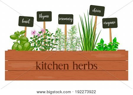 Wooden crate of farm fresh cooking herbs with labels in wooden box. Greenery basil rosemary chives thyme oregano with text. Horticulture. houseplants. Gardening. For advertising poster banner