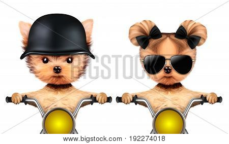 Couple of funny animal with aviator sunglasses and helmet sitting on motorbikes, isolated on white. Love and friendship concept. Realistic 3D illustration