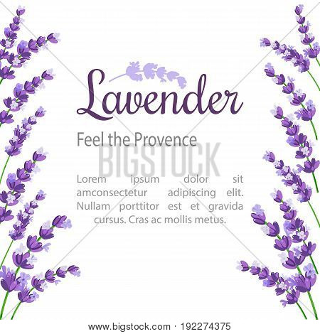 Lavender Card with flowers. Vintage Label with provence violet lavender. design for natural cosmetics beauty store health care products perfume essential oil. Can be used as wedding background.
