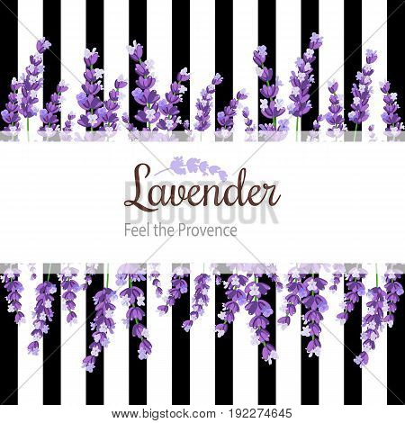 Lavender Card with flowers. Vintage Label with provence violet lavender and stripes. Background design for natural cosmetics, beauty store, health care products, perfume, essential oil