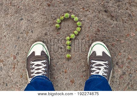 Question sign composed from tiny green chestnuts