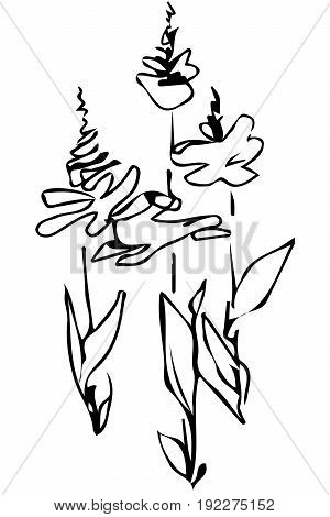 Vector Sketch Flower Bud On Stem